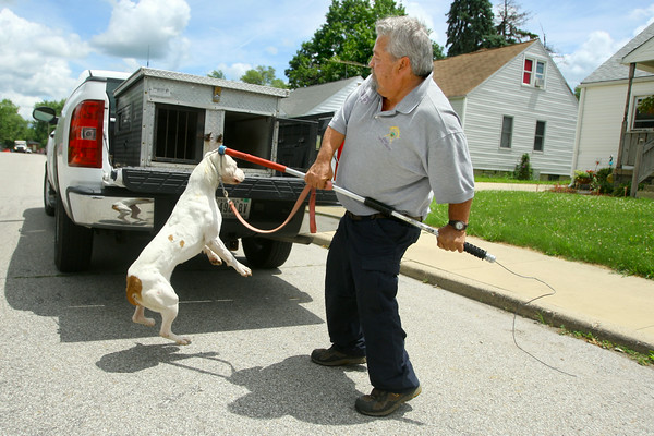 7-2-14   --- Animal Control Officer Billy Bryant working in Kokomo and Howard County. Billy responded to a call of an abandoned Pit Bull at 1009 E Firmin Street. While trying to pick up the animal to put it in the cage it turned around an bit him in the hand. --<br />   Tim Bath | Kokomo Tribune