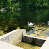 7-22-14<br /> Swans swim alongside one of the dams in Hidden Hills, north of Peru.<br /> Kelly Lafferty | Kokomo Tribune