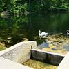 7-22-14<br /> Swans swim alongside one of the dams in Hidden Hills, north of Peru.<br /> Kelly Lafferty | Kokomo Tribune