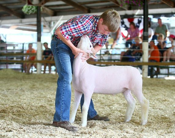 6-25-14<br /> Miami County Fair<br /> Cole Alspaugh positions his Dorset Market Lamb during the Miami County 4-H Fair's Sheep Show.<br /> Kelly Lafferty | Kokomo Tribune