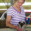 6-25-14<br /> Miami County Fair<br /> Betty Coldiron pets a goat in one of the tents located on the Miami County Fairgrounds.<br /> Kelly Lafferty | Kokomo Tribune