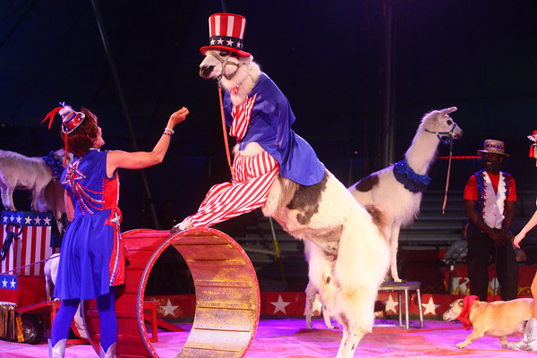5-9-14<br /> Kelly Miller Circus<br /> The Kelly Miller Circus acts perform under the big top in Kokomo on Friday afternoon.<br /> Kelly Lafferty | Kokomo Tribune