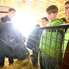 3-18-14   --- Ag Day at the Howard County Fair grounds. Jake Bramel and Niko Bailey check out a steer weighing in at about 1000 pounds.  -- <br />   KT photo | Tim Bath