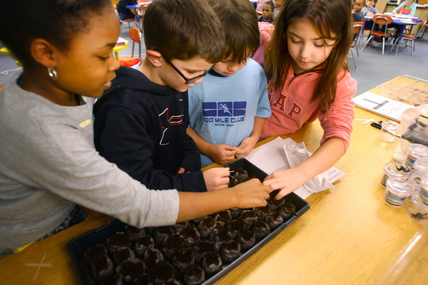 2-27-14   --- Students at Boulevard Elementary plant tomato seeds that have traveled into space. They also plante seeds that have not to see if there is any difference in growing patterns. Brielle Jackson, Karson Parrott, Brayden Gonzalez and Isabella Bailey plant the seeds. They will see which sets germinates faster, in greater numbers or not any difference. -- <br />   KT photo | Tim Bath