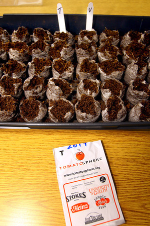 2-27-14   --- Students at Boulevard Elementary plant tomato seeds that have traveled into space. They also plante seeds that have not to see if there is any difference in growing patterns. -- <br />   KT photo | Tim Bath