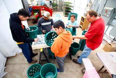 Basket Planting