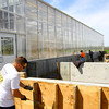 4-28-14   --- Beck's Hybrids located in Hamilton county will be expanding and creating more jobs. Dustin Anderson works on the foundation for another greenhouse they are building on site. -- <br />   Tim Bath | Kokomo Tribune