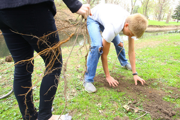 5-1-14   --- Kokomo Area Career Center students worked community projects at Howard Heaven, Camp Tycony and Highland Park. Colten Piarce planting a tree along the Kokomo Creek in Highland Park.  -- <br />   Tim Bath | Kokomo Tribune