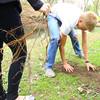 5-1-14   --- Kokomo Area Career Center students worked community projects at Howard Heaven, Camp Tycony and Highland Park. Colten Piarce planting a tree along the Kokomo Creek in Highland Park.  -- <br />   Tim Bath | Kokomo Tribune