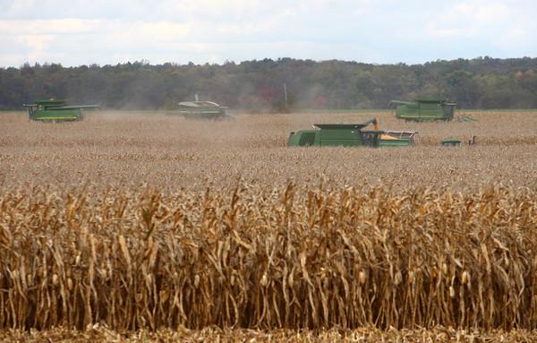 10-23-13<br /> Harvesting for Gerald Sullivan<br /> <br /> KT photo | Kelly Lafferty