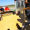 9-25-13  --  Grain Bin Rescue Training being put on by Steve Wettschurack from Purdue University at Kokomo Grain. Buried in corn sideways, Stew Matlock wiggles his way out of the corn using the sides of a wall.<br />   KT photo | Tim Bath