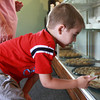 9-3-13<br /> Kokomo Confectionary<br /> Austin Rush, 5, points out his favorite sweets at Kokomo Confectioners Co., a student-run candy store.<br /> KT photo | Kelly Lafferty