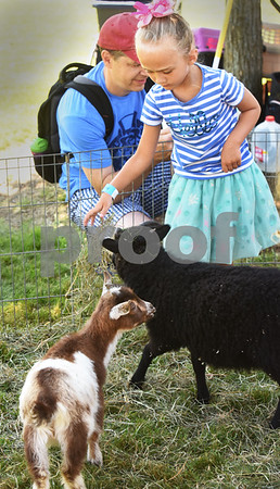 BRYAN EATON/Staff photo. Kenney Robinson, 5, of Andover throws hay to a baby goat and young black sheep at Farm Day at the park. The event was sponsored by the Andover Recreation Department.