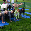 CARL RUSSO/Staff photo. A class picture is taken at the end of yoga session. Goat yoga class in the Andover Park Thursday night. The Andover Recreation Dept. held the event featuring baby goats from Chip-in Farm in Bedford Ma. 9/19/2019