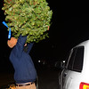 CARL RUSSO/staff photo. Peter Berube, Andover Youth Services alumnus and seven year Tree Lot volunteer, prepares to tie a Christmas tree to the roof of a car. Andover Youth Services has opened their annual Christmas tree lot, located next to the high school. <br /> <br /> Christmas trees, wreaths of all sizes as well as other decorations are for sale to help support the Andover Youth Services program. The trees were hand-picked, cut, packed and delivered by an enthusiastic group of Andover High school students who traveled to Canada.<br /> <br /> This year, three wreaths made by and autographed by Andover's Mike Yastrzemski, right fielder for the San Francisco Giants are being sold.12/01/2020