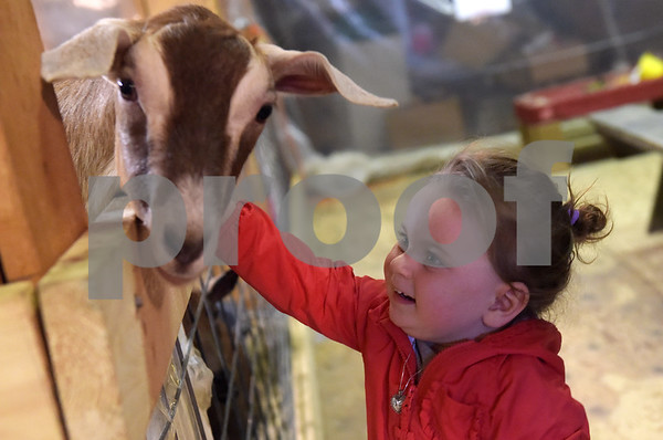 J and F Farms jumping into spring with baby goats, special feeding times