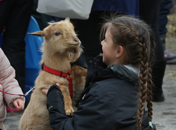 MIKE SPRINGER/Staff photo<br /> Nine-year-old Ella Giuliano of Manchester visits with a goat Sunday during the 21st annual Frost Festival at Alexander-Carr Park in Derry.<br /> 2/16/2020