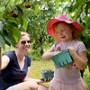 TIM JEAN/Staff photo<br /> <br /> Heather Rowe, left, of Londonderry picks cherries with her daughter Emmy, 3, at Sunnycrest Farm in Londonderry. Large crowds descended on the farm for the first weekend of the pick-your-own cherries season.   6/26/20