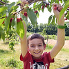 TIM JEAN/Staff photo<br /> <br /> Rowan Nichols, 10, of Derry, picks cherries growing at Sunnycrest Farm in Londonderry. Large crowds descended on the farm for the first weekend of the pick-your-own cherries season.   6/26/20