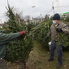TIM JEAN/Staff photo<br /> <br /> Nick Maffattone, left, and Bob Oliver, both from St. Mark's Council #10488 Knights of Columbus unwrap a tree to be sold during the 31st annual charity tree lot sale in Londonderry, NH.  11/28/20