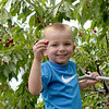 TIM JEAN/Staff photo<br /> <br /> Giovanni Capozzo, 4, of Manchester, climbs a ladder to  pick cherries growing at Sunnycrest Farm in Londonderry.   6/26/20