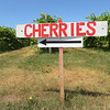 TIM JEAN/Staff photo<br /> <br /> A sign points towards the cherry section growing at Sunnycrest Farm in Londonderry.   6/26/20