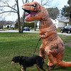 CARL RUSSO/Staff photo. Laurie Chester of Salisbury went a little further to protect herself and others from the Coronavirus by wearing a T-Rex costume. <br /> <br /> Chester and her dog, Skeeter surprised her son, who lives in Haverhill ( he would not give his name) on his 21st. birthday dressed as T-Rex (Tyrannosaurus Rex) in the North Ave. neighborhood. <br /> <br /> While walking her dog, she received a number of honks and cheers from passing motorist. This was the very the first time she dressed up in the T-Rex costume.4/17/2020
