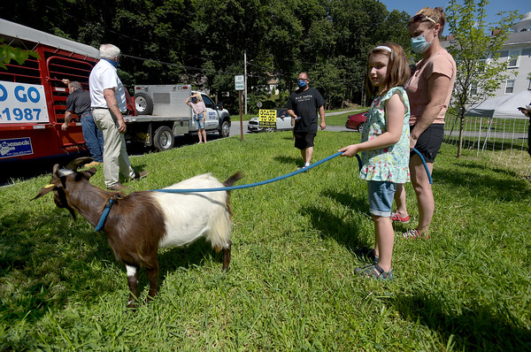 TIM JEAN/Staff photo<br /> <br /> Naomi Wilson, 7, and Whitney Willman tend to a goat from Goats to Go in Georgetown before they are lead in to chow down on the tall grass at Mill Brook Park in Haverhill. The park is the new site of Haverhill's Vietnam Veterans Memorial.   7/28/20