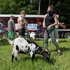 TIM JEAN/Staff photo<br /> <br /> Harmony Wilson, right, tends to a goat from Goats to Go in Georgetown before they are lead in to chow down on the tall grass at Mill Brook Park in Haverhill. The park is the new site of Haverhill's Vietnam Veterans Memorial.   7/28/20