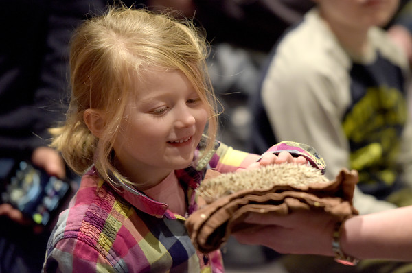 TIM JEAN/Staff photo <br /> <br /> Layla Mitchell, 5, pets a hedgehog during Curious Creatures live animal program at the Haverhill Public Library.   1/3/20