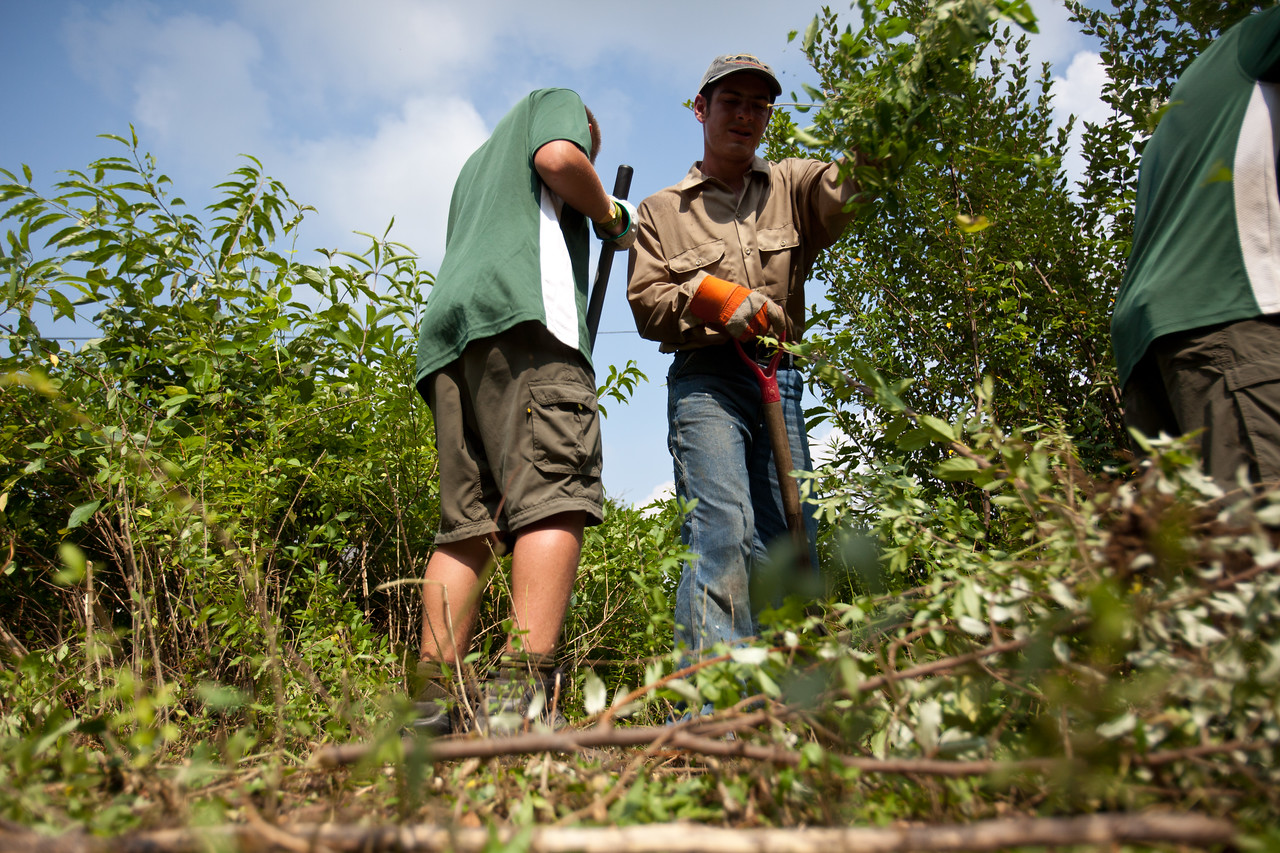 Volunteers removing brush in Whipple, WV - site of a service project. Corporation for National and Community Service Photo.