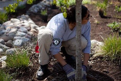 An AmeriCorps member planting trees for the Service Bowl in Baltimore, MD. Corporation for National and Community Service Photo.