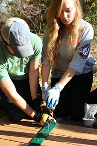 AmeriCorps VISTA member Meghan Berka serving during Veterans Day in Washington, D.C. Corporation for National and Community Service Photo.