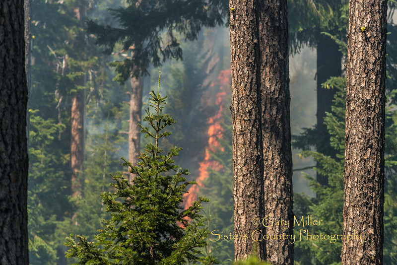 Around 8:00 AM on July 17, 2013 a forest fire was reported off of the 1030 road only 1/2 a mile from Highway 242 west of Sisters, Oregon where the same morning that the Cascade Cycling Classic would be racing 300 racers down from the McKenzie Pass. The fire, incident 322, was fought by ODF,and USFS crews and helicopters with support from the Winona Hotshots and the Sisters/Camp Sherman Fire Department.  Copyright © 2013 Gary N. Miller, Sisters Country Photography