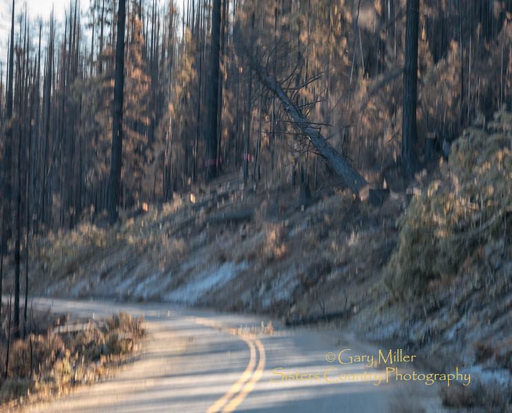 Hwy 242 on the McKenzie Pass suffered signigicant fire damage to both the road and the scenic corridor during the Millie Fire resulting in extensive hazard tree removal and repairs by the USFS and ODOT © 2017  Gary N. Miller, Sisters Country Photography