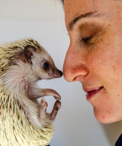 Hedgehog & Friend