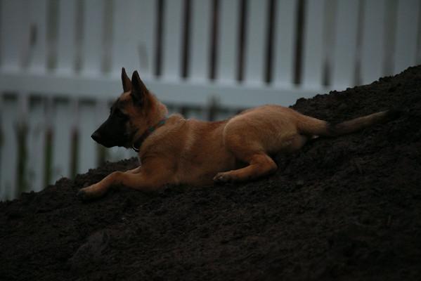 Nia puppies 8/24/2014