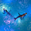 140402 Aquarium 2