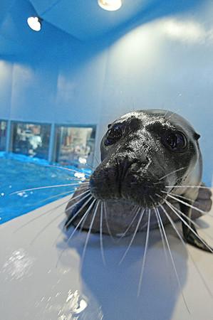 140402 Aquarium 5