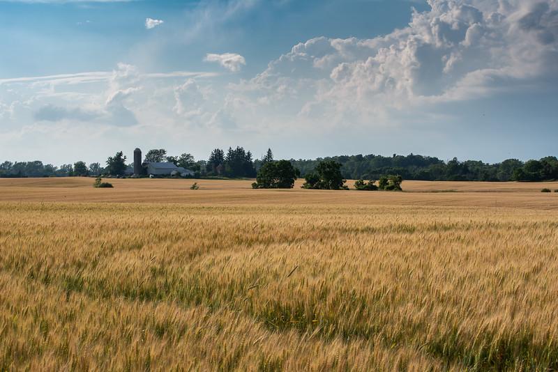 Farm Field - Lincoln