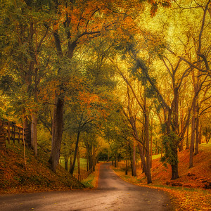 Winding Through Fall - Pelham