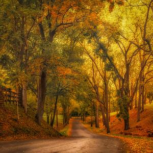 Winding Through Fall - Pelham