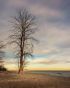 Lone Tree at Morgan's Point - Wainfleet