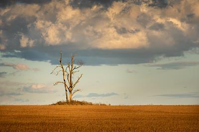 Stick Tree in a Field - Wainfleet