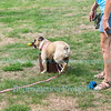 The Dog Days of Summer & Yappy Hour at Schulze Vineyards & Winery, Burt, NY on August 21, 2016.