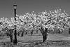 Blossum Lampost (#0534)