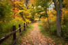 Down The Autumn Path (#0236)