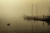 Morning Fog (#0039)