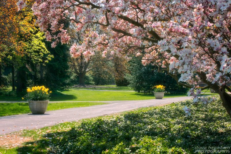 Spring Has Sprung (#0046)