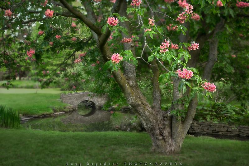 Spring Dreams (#0297)